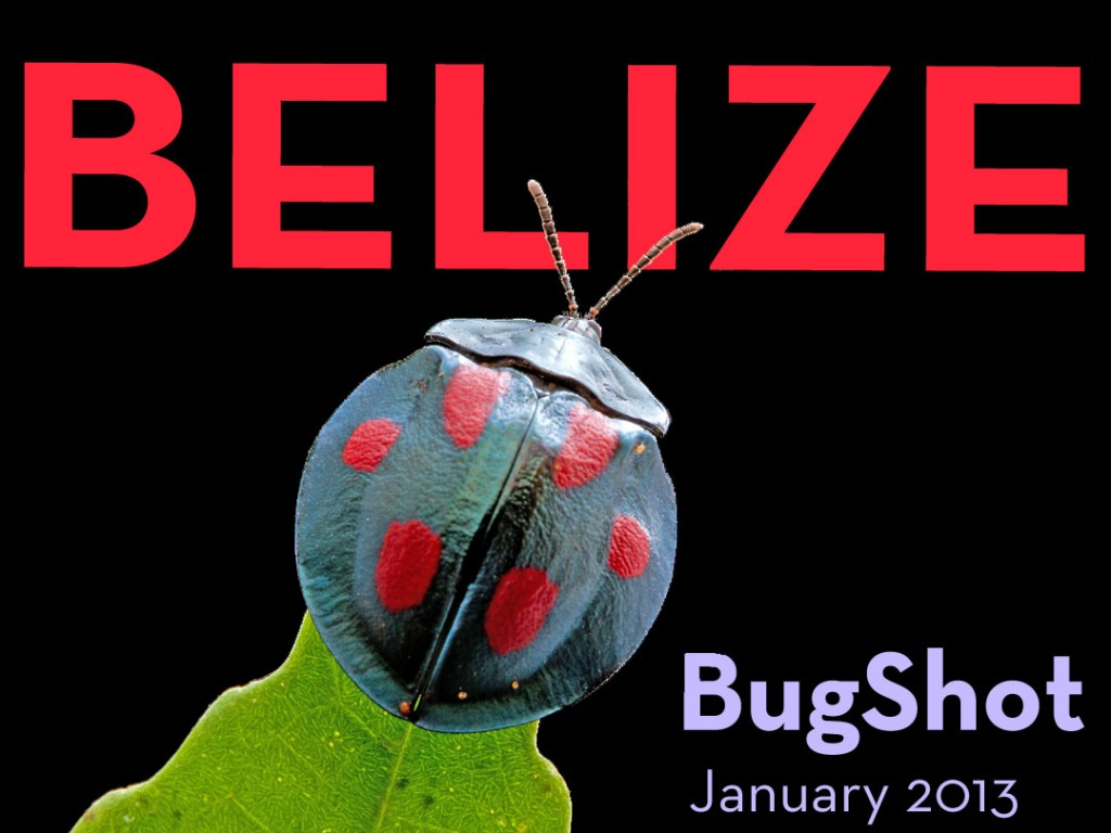 Belize Bug Photography Adventure