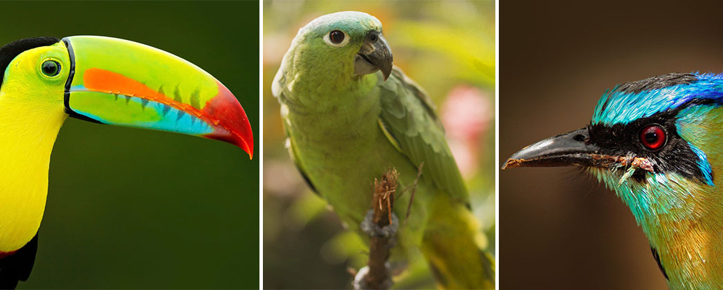 Birding Adventures in Belize