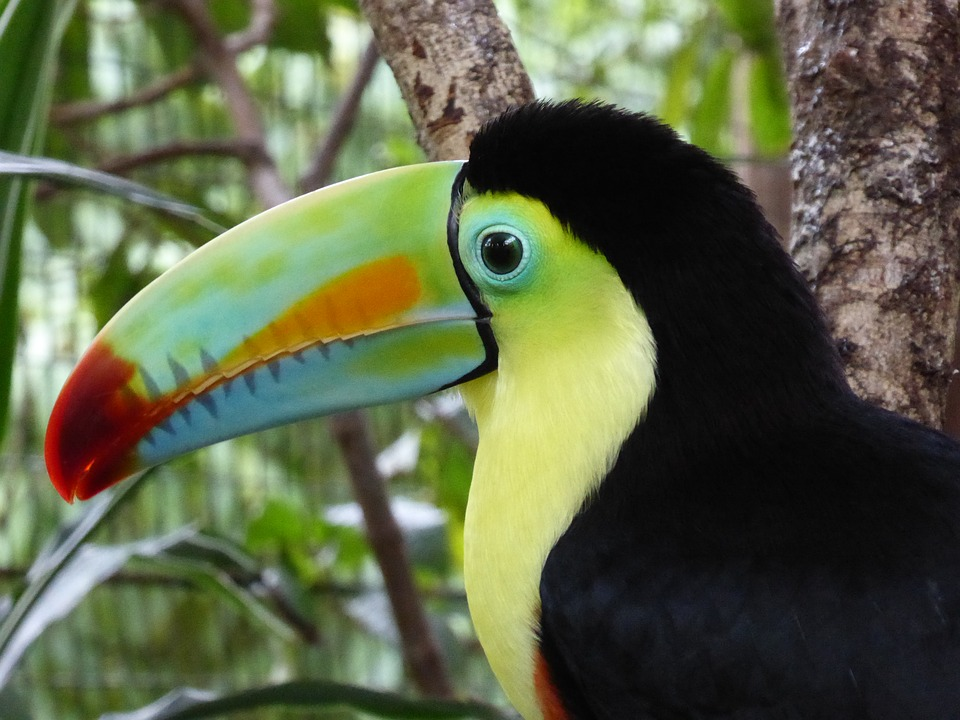 Birding Adventures: The National Bird of Belize