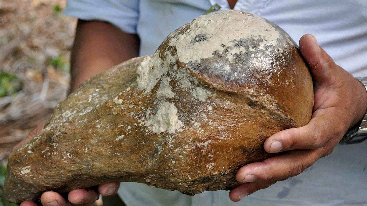 27,000 years old tooth of giant sloth discovered in Belize