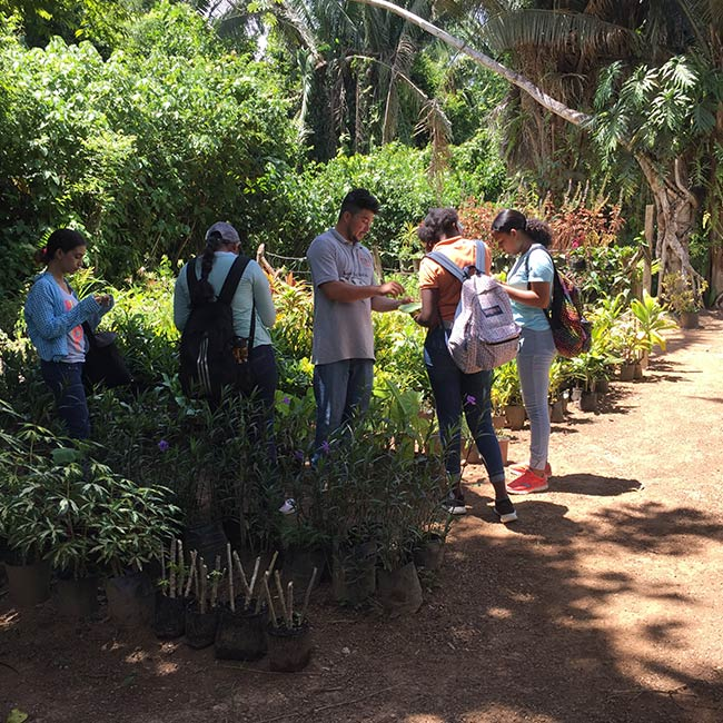 Belize Botanical Garden Tour