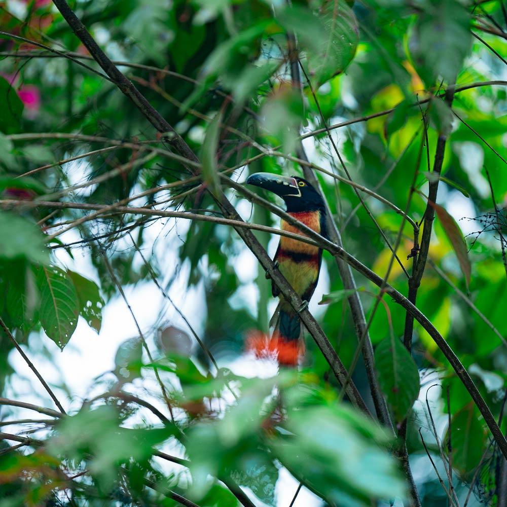 Best Belize Tours Birding