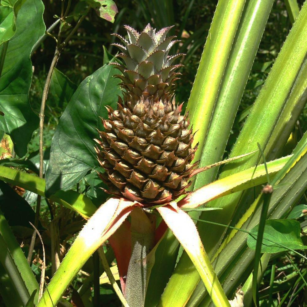 Best Belize Tours Botanical garden tours